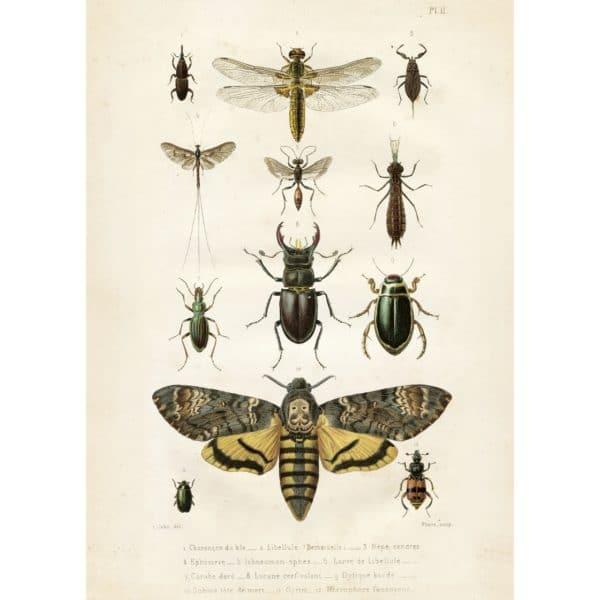 poster Insekter