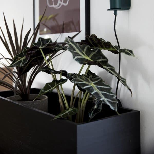 Blombänk svart