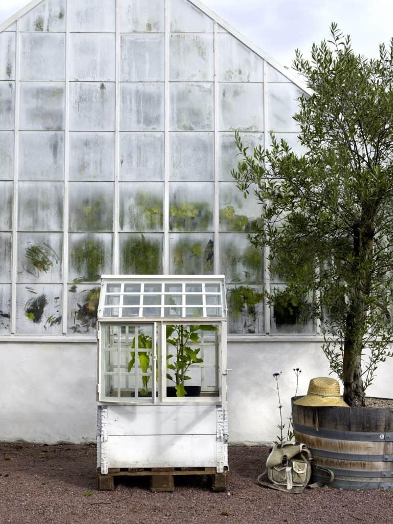 Affari växthus