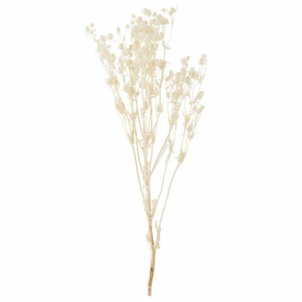torkade blommor rysk martorn Madam Stoltz