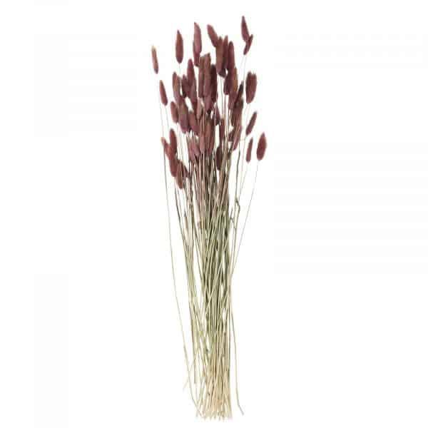 torkade blommor harsvans Madam Stoltz